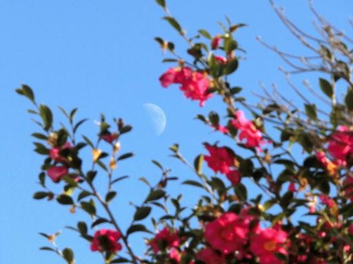 kantubaki-moon2.jpg