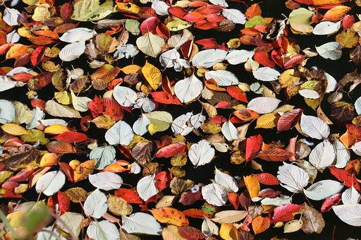 leaves2017.jpg