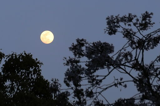 mooncherry.jpg