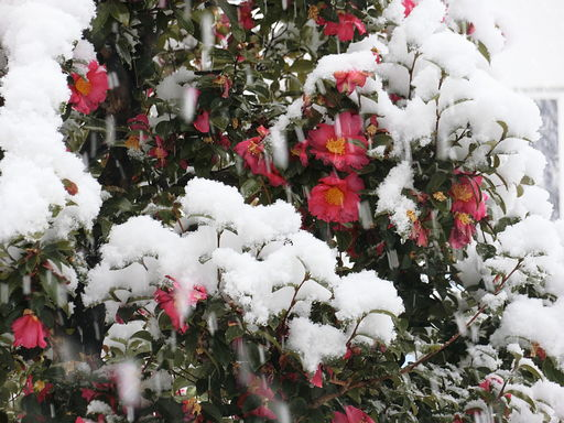 snow20180122-3.jpg
