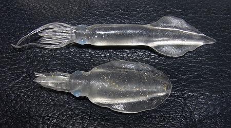 squids2.jpg